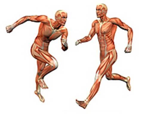 Der Aufbau des menschlichen Körpers :-)